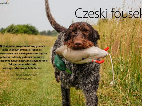 Czeski Fousek