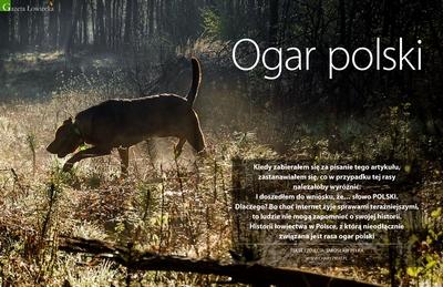 Ogar Polski